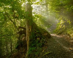 morning light (andre.kirtz) Tags: kantonbern baum berneroberland weeg sonnenstrahl schweiz giessbach wald sommer moos