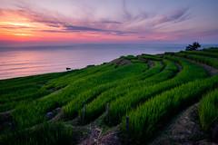 Sunset at Shiroyone Senmaida Rice Terraces (modesrodriguez) Tags: japan japon travel shiroyonesenmaida riceterraces landscape paisaje sunset atardecer clouds goldenhour nature sky