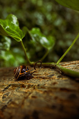 Onward and Upward (Cagey75) Tags: fujifilm 16mm snail bark rain ireland upward green ash ivy august
