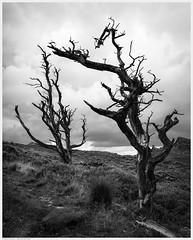_DSC2676-Enhanced (alexcarnes) Tags: roaches hen cloud leek staffordshire tree alex carnes alexcarnes nikon d850 sigma 28mm f14 art