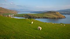 Skye Scene (San Francisco Gal) Tags: ancuiltheann thecuillin isleofskye scotland sheep loch