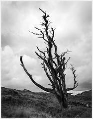 _DSC2689-Enhanced (alexcarnes) Tags: roaches hen cloud leek staffordshire tree alex carnes alexcarnes nikon d850 sigma 28mm f14 art
