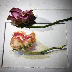 Day 1474. The #rose #painting for today. #watercolour #watercolourakolamble #sketching #stilllife #flower #art #fabrianoartistico #hotpress #paper #dailyproject (akolamble) Tags: rose painting watercolour watercolourakolamble sketching stilllife flower art fabrianoartistico hotpress paper dailyproject