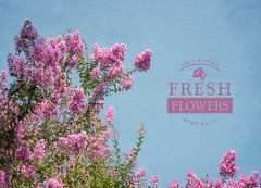 Fresh Flowers (JMS2) Tags: nature sky flowers tree pink blue summer outdoor floral blossoms