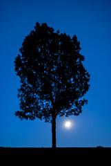 Moonrise in Englewood Park (jolynne_martinez) Tags: kansascity missouri unitedstates englewoodpark park sky dusk twilight moon moonrise tree silhouette nikon nikond60