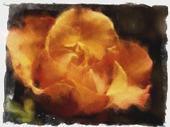 Orange Rose (Chuck_Boyce) Tags: digitalart photomanipulation flower rose orange outside outdoors garden illustration