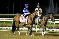 Mr. Money (Casey Lynn Photos) Tags: 2019copyright indiana indianagrand horseracing racehorse canon canonphotography canonusa canon7dmii canonlens canonphoto canoncamera horse equine sportsphotography