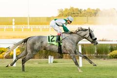 Viva Vegas (Casey Lynn Photos) Tags: 2019copyright indiana indianagrand horseracing racehorse canon canonphotography canonusa canon7dmii canonlens canonphoto canoncamera horse equine sportsphotography