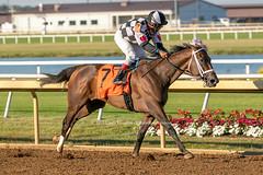 MyLady Curlin (Casey Lynn Photos) Tags: 2019copyright indiana indianagrand horseracing racehorse canon canonphotography canonusa canon7dmii canonlens canonphoto canoncamera horse equine sportsphotography