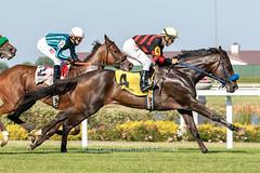 Marchenwald (Casey Lynn Photos) Tags: 2019copyright indiana indianagrand horseracing racehorse canon canonphotography canonusa canon7dmii canonlens canonphoto canoncamera horse equine sportsphotography