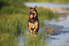 IMG_7323 (geraldtourniaire) Tags: eos6d ef ef40300lusm hund natur nature canon 6d