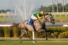 Real Story (Casey Lynn Photos) Tags: 2019copyright indiana indianagrand horseracing racehorse canon canonphotography canonusa canon7dmii canonlens canonphoto canoncamera horse equine sportsphotography