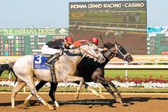 Close Call (Casey Lynn Photos) Tags: 2019copyright indiana indianagrand horseracing racehorse canon canonphotography canonusa canon7dmii canonlens canonphoto canoncamera horse equine sportsphotography