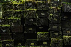 Numbered railroad ties on the side of an abandoned railroad line in the Alishan forest in Taiwan. #taiwan #alishan #forest #forestbath #railroad #asiaphotographer #asia #exploretocreate #travelphotography #traveltheworld #Pelican https://ift.tt/2HjQy71 (vietnam-photographer-videographer) Tags: vietnam photographer ho chi minh city hanoi thailand cambodia laos corporate industrial portrait travel editorial