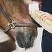 Girl burshing a horse's hair