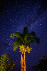 Haiku Maui Palm and stars (birzer) Tags: hawaii maui haiku stars palm beach travel milkyway
