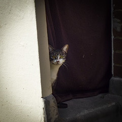 Shy Little Cat, Ellsworth Street, Bethnal Green (London Less Travelled) Tags: uk unitedkingdom britain england london eastlondon street city urban suburban suburb suburbs suburbia towerhamlets bethnalgreen cat