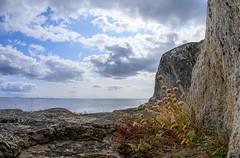 Kaunissaari (Antti Tassberg) Tags: kaunissaari kesä luonto landscape fisheye kallio sipoo kasvi kukka suomi 15mm finland flower nature plant prime rock scandinavia