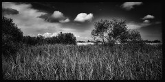 """Titchwell Marsh (view large) <a style=""""margin-left:10px; font-size:0.8em;"""" href=""""http://www.flickr.com/photos/83289643@N00/48597797441/"""" target=""""_blank"""">@flickr</a>"""