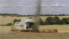 Harvesting a dust-devil in the Cambridgeshire countryside. (Linton Snapper) Tags: claas combineharvester harvest farming agricultural canon lintonsnapper castlecamps