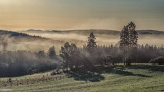 19082019-DSC_0056 (vidjanma) Tags: taverneux arbres brume matin vallée