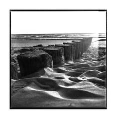 plage du nord (michel lebedel) Tags: soleil square sea sun argentique analogique noirblanc blackwhite hasselblad 500cm 6x6 120 film ilford400
