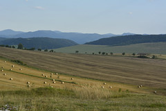 Slovakia (Slávka K) Tags: fields summer light gold view country landscape nikon slovakia hills valey grass flowers trees forest blue sky outdoors nopeople agriculture scenics