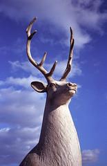 Skydeer (Igor Verkhovskiy) Tags: konica big mini 35mm film fujifilm filmforlife filmnotmegapixels filmfeed filmnotdead analogcamera analogfeatures russia siberia krasnoyarsk natural light streetphotography street photography photographersinrussia blue sky white deer