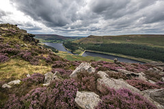 Dove Stones and Yeoman Hey Reservoirs (Craig Hannah) Tags: dovestonesreservoir dovestones reservoir tree lonetree greenfield saddleworth pennine peakdistrictnationalpark peakdistrict nature nationalpark heather flower countryside outdoors hills moorland craighannah august 2019 westriding yorkshire oldham greatermanchester england uk canon photography chewvalley landscape summer