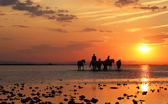 Gardians leading horses into water - Camargue - South of France (lotusblancphotography) Tags: france camargue sunrise sky clouds ciel nuages leverdesoleil water eau reflection reflet animal horse cheval people gens gardians