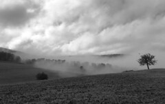 morning walk (Rosmarie Voegtli) Tags: clouds sky bw blackwhite landscape tree mist fog dornach layers trees solothurn switzerland suisse svizzera schweiz himmel nebel inexplore agriculture