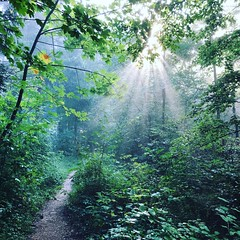 start in a new day (Rosmarie Voegtli) Tags: light sun sunlight green leaves forest hiking sunrays wald morningwalk iphone dornach instagram path weg