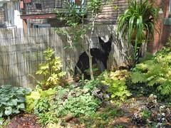 Fox (navejo) Tags: montreal quebec canada fox garden tree fence