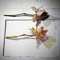 Day 1475. The #rose #painting for today. #watercolour #watercolourakolamble #sketching #stilllife #flower #art #fabrianoartistico #hotpress #paper #dailyproject (akolamble) Tags: rose painting watercolour watercolourakolamble sketching stilllife flower art fabrianoartistico hotpress paper dailyproject