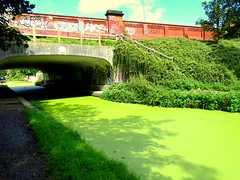Bridge across the green canal (Tony Worrall) Tags: preston lancs lancashire city welovethenorth nw northwest north update place location uk england visit area attraction open stream tour country item greatbritain britain english british gb capture buy stock sell sale outside outdoors caught photo shoot shot picture captured ilobsterit instragram photosofpreston canal green overgrown greenish bridge crossing nature natural seasonal nice waterway lancastercanal