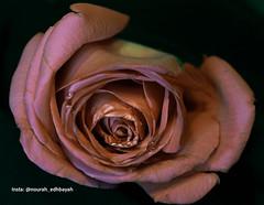 Love you 002 (Nourah.A.Edhbayah (Super Flower♥إظبيه)) Tags: نوره عبدالله اظبيه الكويت nourah abdullah q8 kuwait