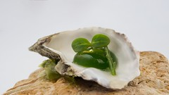 Green Oyster (2guicosta) Tags: gourmet kitchen dish green rock oyster michelin star