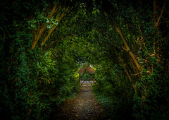 The Gatehouse (Gullivers adventures) Tags: green gatehouse ireland airbnb pathway path colour country music love trek adventure moody trees nature walking explore newadventures one naturephotography