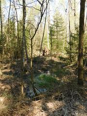 Wasser (elisabeth.mcghee) Tags: vogelfreistätte groser rusweiher wasser water see lake eschenbach oberpfalz upperpalatinate wald forest bäume trees