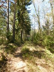 ....durch den Wald zur nächsten Plattform... (elisabeth.mcghee) Tags: vogelfreistätte groser rusweiher wasser water see lake eschenbach oberpfalz upperpalatinate wald forest bäume trees weg pfad path
