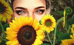 🌻 (Felixamberly) Tags: slphotography sl secondlife sunflower euphoric yellow morning sunshine eyes closeup summer bright color