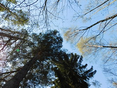 Blick nach oben gerichtet (elisabeth.mcghee) Tags: vogelfreistätte groser rusweiher wasser water see lake eschenbach oberpfalz upperpalatinate bäume trees himmel sky wald forest