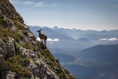 (akcfoto) Tags: vercors montagne animaux nature bouquetins