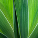 Leaf patterns - Motifs de feuille