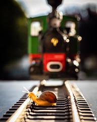 don't play on the tracks (auntneecey) Tags: train tracks traintracks dontplayonthetracks thesecretlifeofsnails snailtales humor
