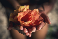 _MG_2530 (FreyaBroos) Tags: frenchpolynesia travel tahiti pacific southpacific hands hand handsoftheworld nature flower