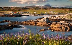 Mull landscape 2019 40 (chris-parker) Tags: mull iona scotland beach rocks sand yacht sunset sea pinks seaweed sailing ship traigh ban boat rockpool puppy cal mac caledonian macbrayne
