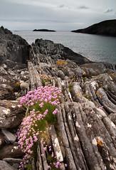 Mull landscape 2019 25 (chris-parker) Tags: mull iona scotland beach rocks sand yacht sunset sea pinks seaweed sailing ship traigh ban boat rockpool puppy cal mac caledonian macbrayne