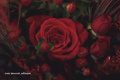 Love you (Nourah.A.Edhbayah (Super Flower♥إظبيه)) Tags: نوره عبدالله اظبيه الكويت nourah abdullah edhbayah q8 kuwait