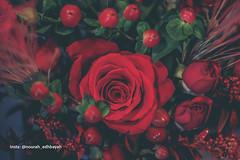 Miss you (Nourah.A.Edhbayah (Super Flower♥إظبيه)) Tags: nourah abdullah edhbayah q8 kuwait نوره عبدالله اظبيه الكويت